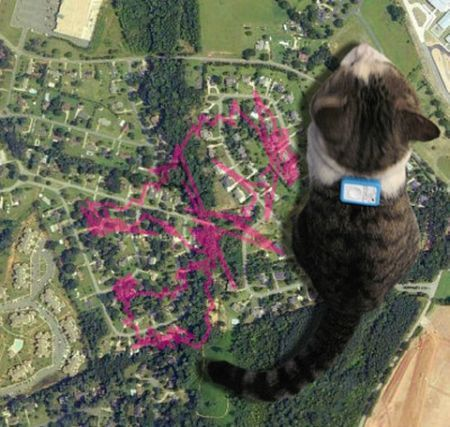Grazie al GPS e alla videocamera seguiamo il gatto su Google Earth